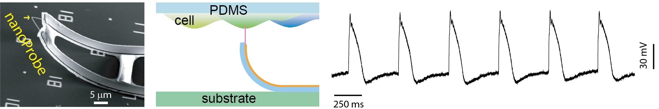 3D_nanoProbe_v1